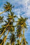 Palmeras del coco con el cielo azul y nube-Borneo fotos de archivo