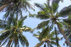 Palmeras del coco con la opinión del cielo Fotografía de archivo