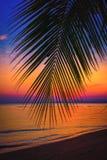 Palmeras del coco de la silueta en la playa en la puesta del sol Imágenes de archivo libres de regalías