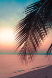 Palmeras del coco de la silueta en la playa en la puesta del sol fotografía de archivo