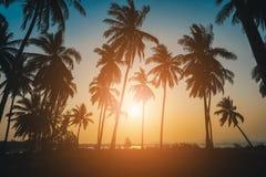 Palmeras del coco de la silueta en la playa en la puesta del sol Fotos de archivo
