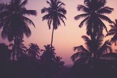 Palmeras del coco en el filtro del vintage de la salida del sol Fotos de archivo libres de regalías