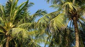 Palmeras del coco en la playa del hin de hua Imágenes de archivo libres de regalías