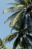 Palmeras del coco en la playa Tailandia del hin de hua Fotos de archivo libres de regalías