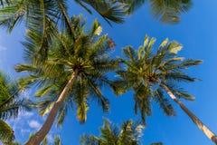 Palmeras del coco en Maldivas delante del cielo fotografía de archivo