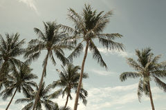 Palmeras del coco en Tailandia Foto de archivo