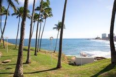 Palmeras del coco, fondo tropical hermoso en un cielo azul Imágenes de archivo libres de regalías
