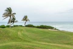 Palmeras del coco que bailan en el viento por la playa Campo de golf al aire libre Manicured foto de archivo