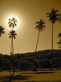 Palmeras del Fijian imagenes de archivo