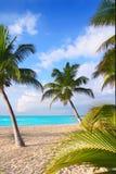 Palmeras del norte del Caribe de la playa en México Imagen de archivo libre de regalías
