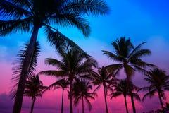 Palmeras del sur la Florida de la puesta del sol de la playa de Miami Beach Foto de archivo