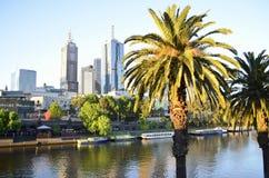 Palmeras delante de Melbourne CBD Imágenes de archivo libres de regalías