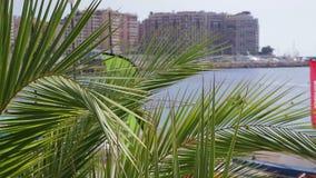 Palmeras delante del paisaje de la ciudad y del mar almacen de metraje de vídeo