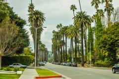 Palmeras en Beverly Gardens Park Fotografía de archivo libre de regalías