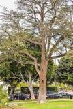 Palmeras en Beverly Gardens Park Fotografía de archivo