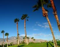 Palmeras en campo de golf Imágenes de archivo libres de regalías
