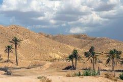 Palmeras en desierto Imagen de archivo