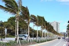 Palmeras en el camino A1A del estado en Fort Lauderdale Imágenes de archivo libres de regalías