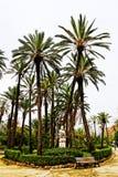 Palmeras en el chalet Bonanno, Palermo del parque fotografía de archivo
