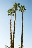 Palmeras en el cielo del desierto Foto de archivo libre de regalías