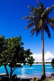 Palmeras en el cielo soleado azul Foto de archivo
