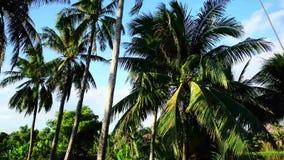Palmeras en el día soleado en el embutido, Myanmar almacen de video