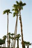 Palmeras en el desierto SK, y 2 Foto de archivo libre de regalías