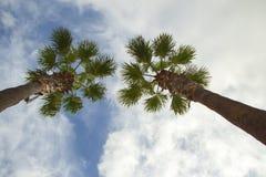 Palmeras en el fondo hermoso del cielo Imagen de archivo