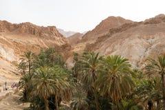 Palmeras en el oasis Chebika de la montaña en la frontera de Sáhara, Túnez, África imagenes de archivo