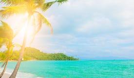 Palmeras en el océano, palmeras y océano con el espacio de la copia Fotografía de archivo