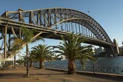 Palmeras en el puerto de Sydney Imagen de archivo libre de regalías