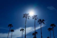 Palmeras en el área de California meridional Newport Fotos de archivo