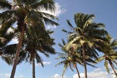 Palmeras en el viento, Australia Foto de archivo libre de regalías