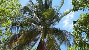 Palmeras en el viento contra el cielo azul almacen de metraje de vídeo