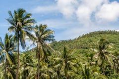 Palmeras en fondo azul del cielo nublado y de la montaña Fotografía de archivo libre de regalías