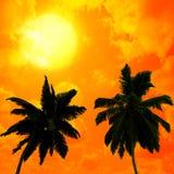 Palmeras a en fondo de la puesta del sol stock de ilustración