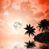 Palmeras a en fondo de la puesta del sol libre illustration
