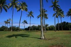 Palmeras en Hawaii Imágenes de archivo libres de regalías