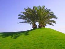 Palmeras en hierba verde Foto de archivo
