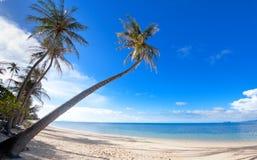 Palmeras en la arena de la playa en centro turístico tropical Imágenes de archivo libres de regalías