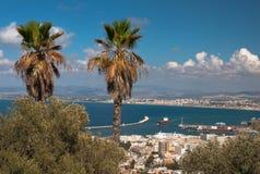 Palmeras en la colina que pasa por alto el puerto y la ciudad Israel Haifa Imagen de archivo libre de regalías