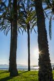 Palmeras en la costa Fotos de archivo