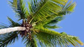 Palmeras en la costa tropical de la isla metrajes