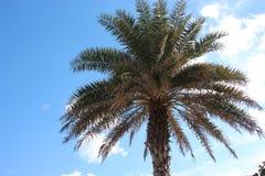 Palmeras en la Florida Imagen de archivo libre de regalías