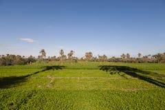 Palmeras en la granja Imagen de archivo libre de regalías