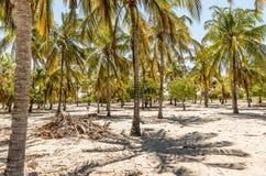 Palmeras en la isla de Lamu en Kenia, África fotografía de archivo libre de regalías