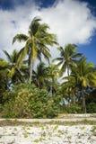 Palmeras en la isla de Zanzibar Imagen de archivo libre de regalías
