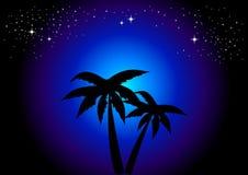 Palmeras en la noche Imágenes de archivo libres de regalías
