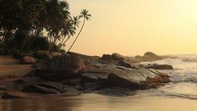 Palmeras en la orilla de una playa tropical en la puesta del sol Sri Lanka almacen de metraje de vídeo