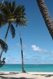 Palmeras en la playa Imagenes de archivo